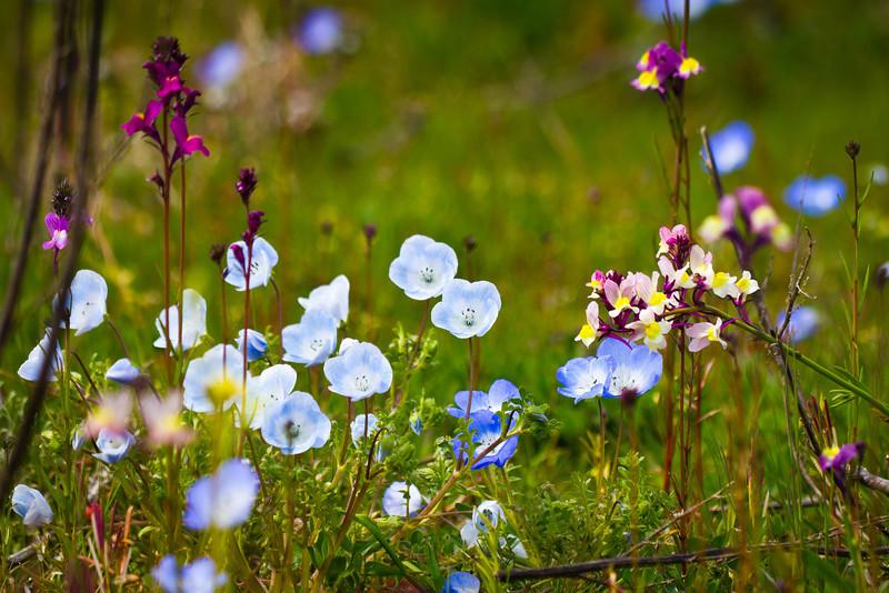 Wildflowers in Garry Point Park.