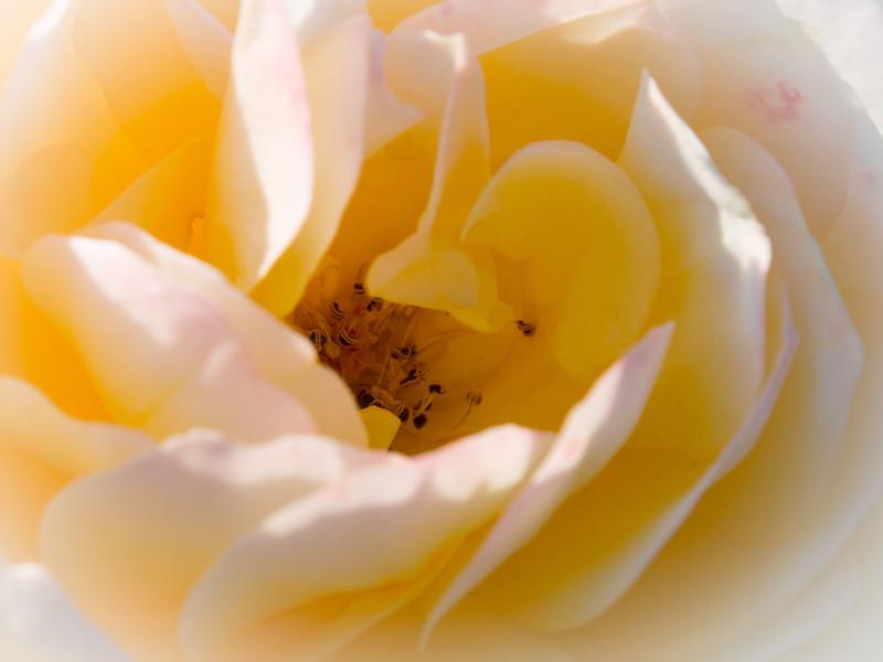 A flower in London Heritage Farm.