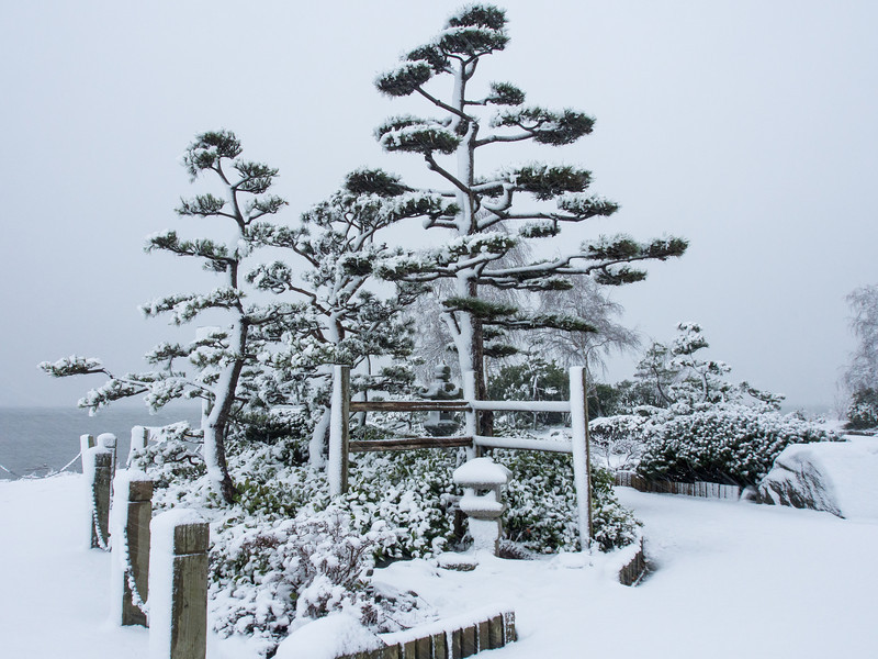 Kuno Garden covered in snow. Garry Point Park in Steveston.