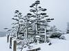 Kuno Garden covered in snow. Garry Point Park in Steveston.