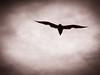 Seagull silhouette.