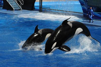 2012_Sea_World_March_  0050