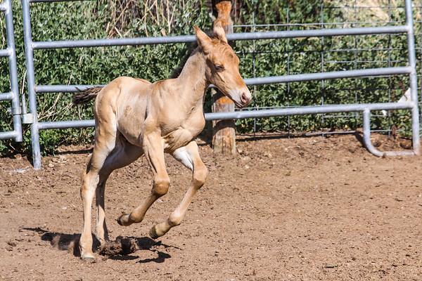 Horse0015