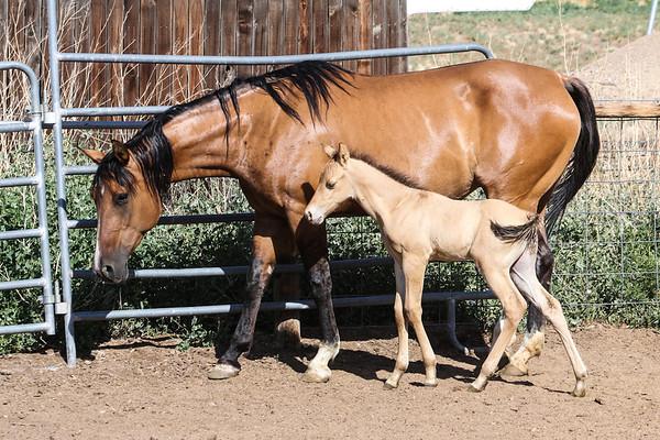 Horse0014