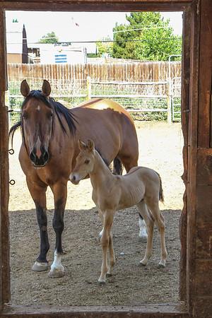 Horse0007