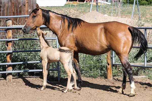 Horse0013