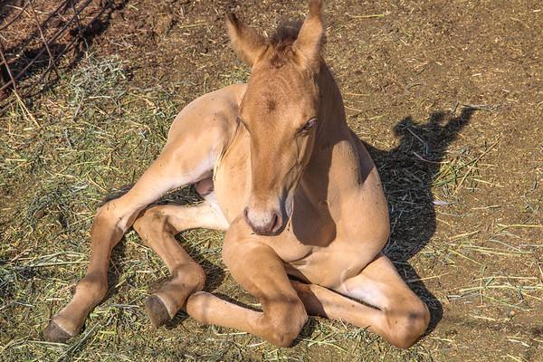 Horse0005
