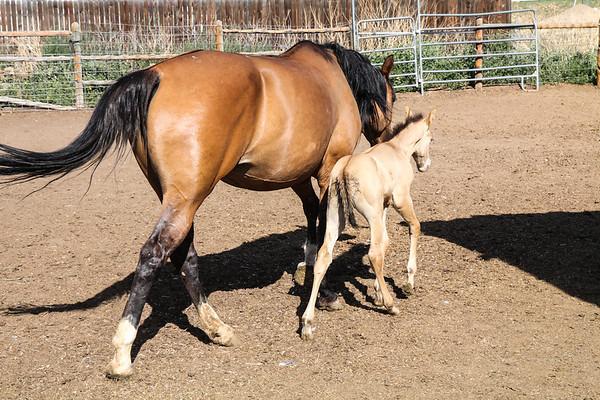 Horse0006