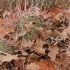 Oak leaves and Cacti.  No, really!