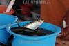 BRASIL 2012-04-05 PEIXE PASCOA, BANCA DO PEIXE BOM  - SAO JOSE DOS CAMPOS - SP BRASIL. / Fish. / Brasilien: Fischverarbeitung. © Lucas Lacaz Ruiz/LATINPHOTO.org