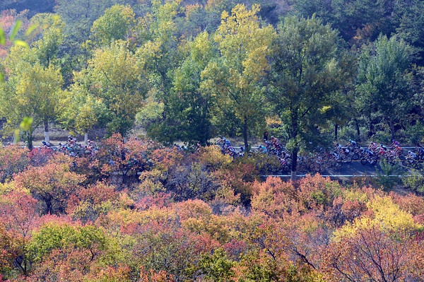Autumnal colours for the autumnal Tour of Beijing peloton in China...