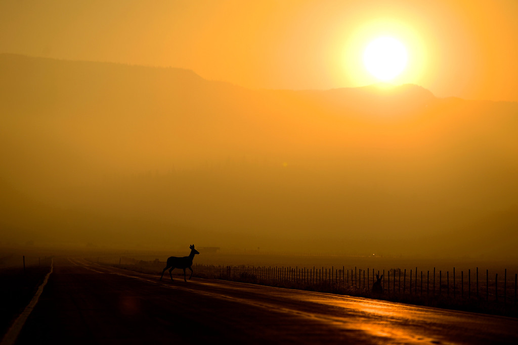 . A deer crosses Highway 149 at sunrise as the Papoose fire continues to burn near Creede, Colorado on June 25, 2013. The three fires that make up the West Fork Complex fire now top out at more than 70 thousand acres. (Photo by AAron Ontiveroz/The Denver Post)