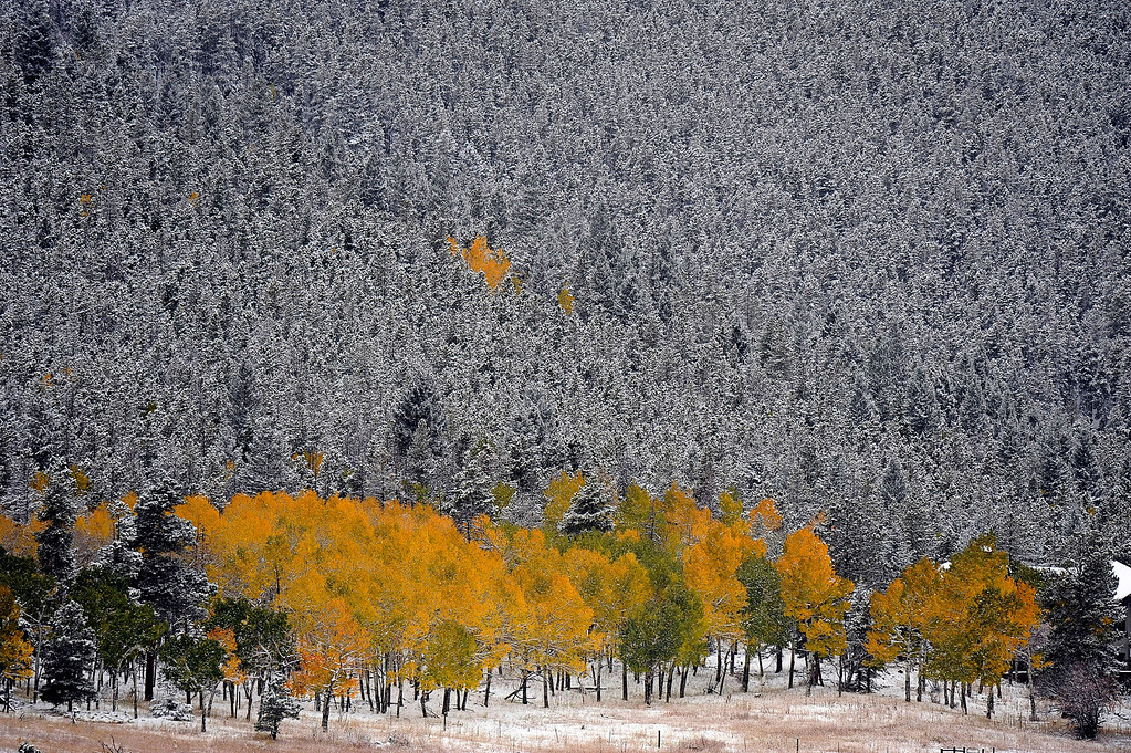 . Squaw Pass in Evergreen is covered by snow on Saturday, October 8, 2011. (Photo by Hyoung Chang/The Denver Post)