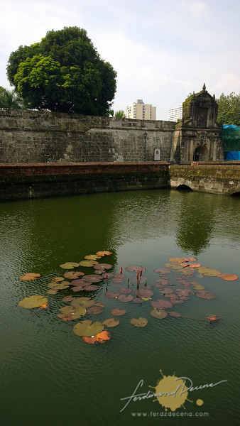 Lilies and Fort Santiago wall