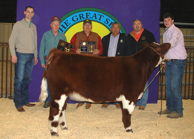 Kody Silas wins Breed Champion English Heifer and Senior Showmanship Champion