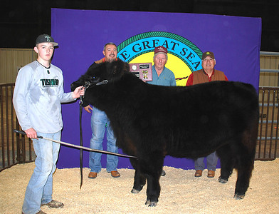 Ridge Stephens wins Market Steer Breed Champion.