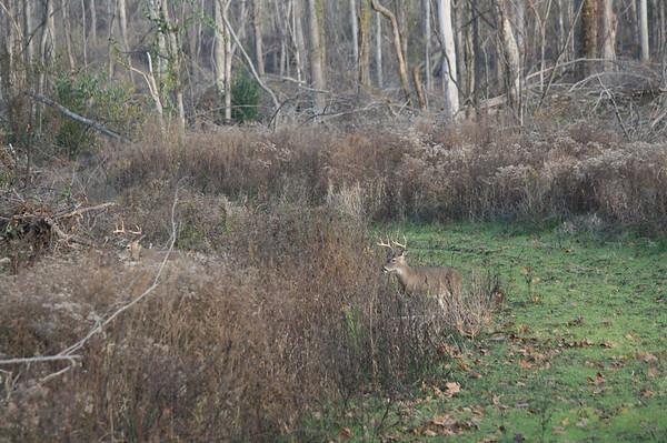 2013 Deer Season