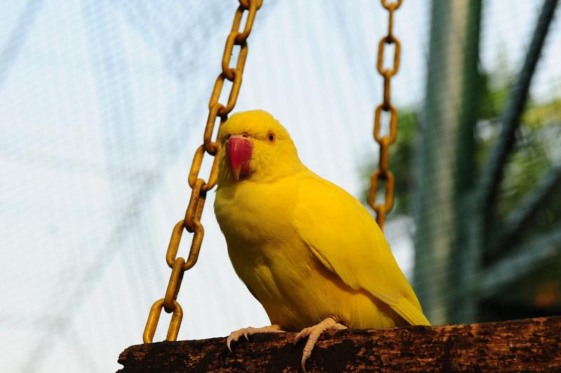 2013_Bird_Park_KL_   0001