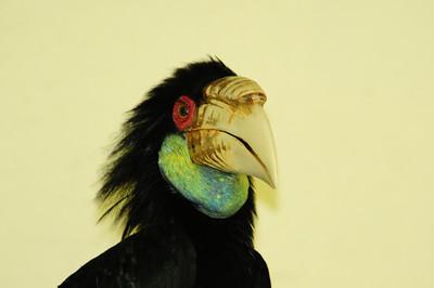 2013_Bird_Park_KL_   0020