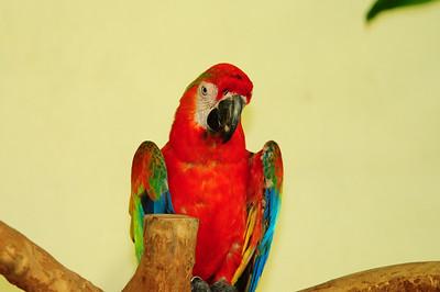 2013_Bird_Park_KL_   0021