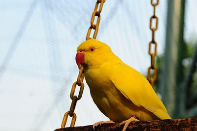2013_Bird_Park_KL_   0003