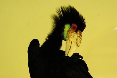 2013_Bird_Park_KL_   0016