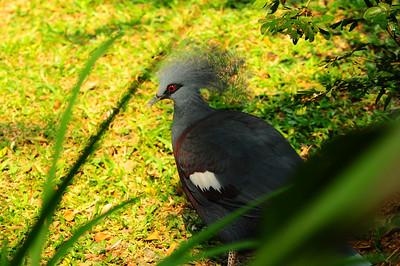 2013_Bird_Park_KL_   0007