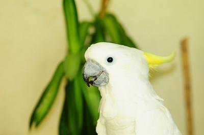 2013_Bird_Park_KL_   0027