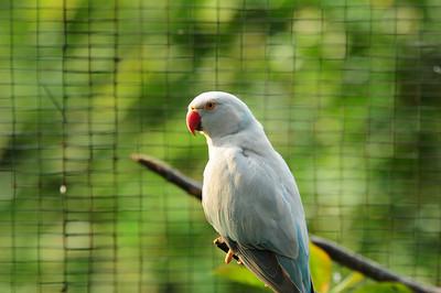 2013_Bird_Park_KL_   0004