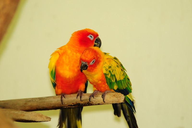 2013_Bird_Park_KL_   0023