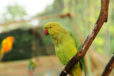 2013_Bird_Park_KL_   0002