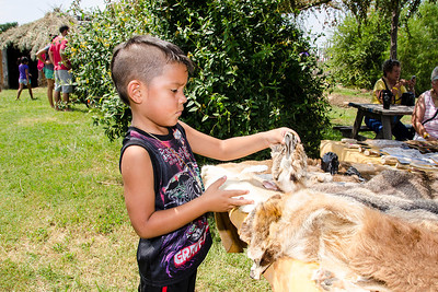 Five-year-old Evan Davis of Ardmore looks at the animal pelts in the Choctwa village.