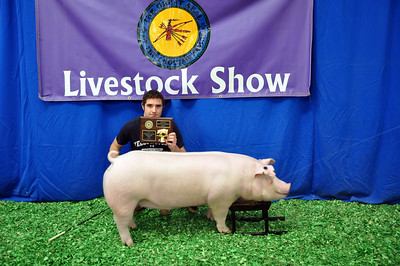 Noah Erwin of Hartshorne FFA wins Chester Reserve Breed Champion