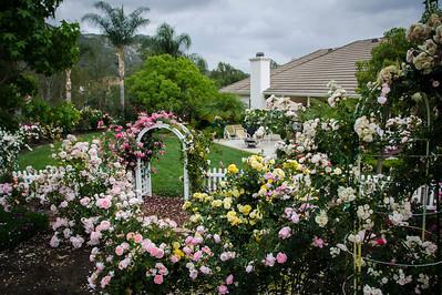 2013 Our  Spring Rose Garden