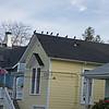 Crows, San Rafael - 1