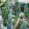 Cactus garden at another home on Chilton Way