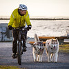 A man walking his dogs on a bicycle.
