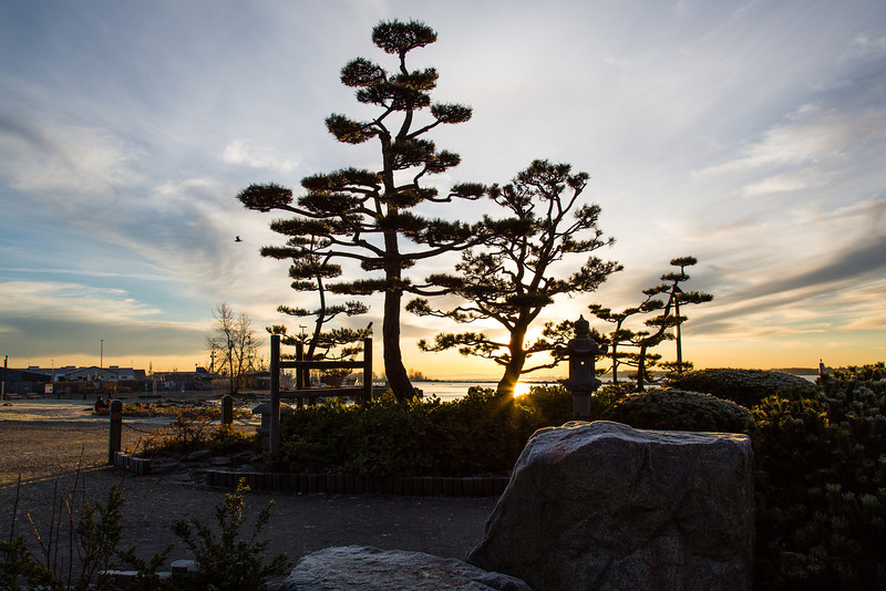 Sunrise at the Kuno Garden in Garry Point Park.