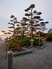 Kuno Garden at sunrise in Garry Point Park.