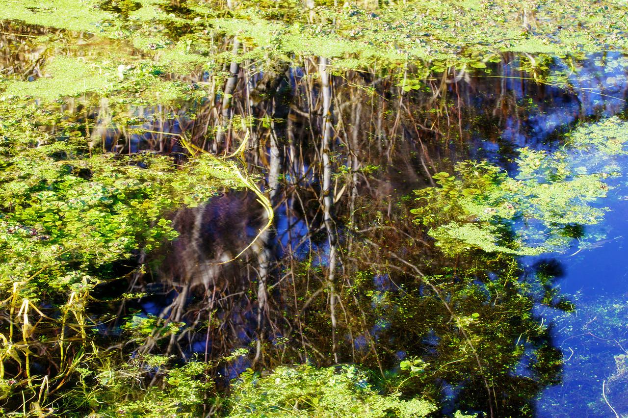 Algae & Reflection
