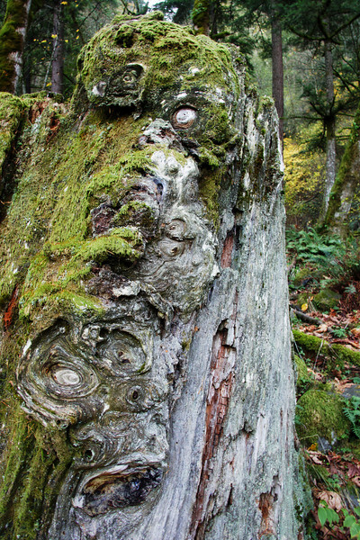 Faces in the Wood
