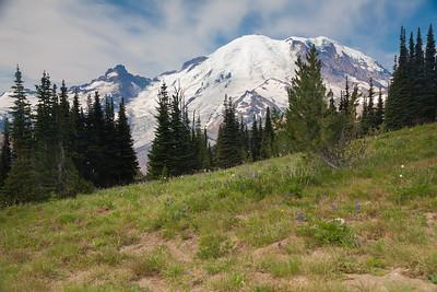 2013 Rainier-Berkeley Meadow