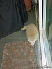 Sept 2, 2013  Baby Albino