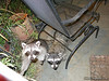 Sept 1, 2013 Mama and baby came up to the gate