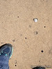 Sept 30, 2013  Had to take a pic of this heart shaped wad of gum on the sidewalk