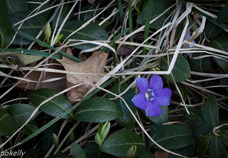 April 7.  Cleaning out around some flower beds, and look what I found!
