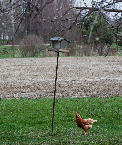 April 16.  Strange bird at the leaning birdfeeder.