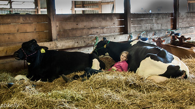 08/20.  This girl was very comfortable with her cows in the Dairy Barn of the Fair.