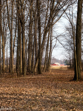 12-27.  View of the farm buildings through the trees at Peak.