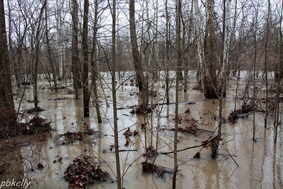 12-23.  Black River. This was past the high water and starting to recede.